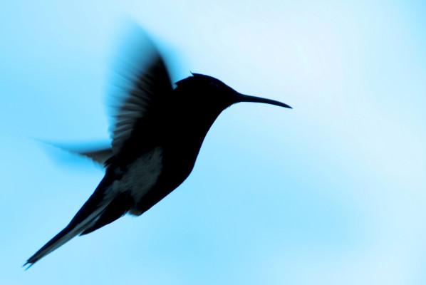 Biotherapeutics startup Hummingbird Bioscience brings its overall Series B funding to $25 million