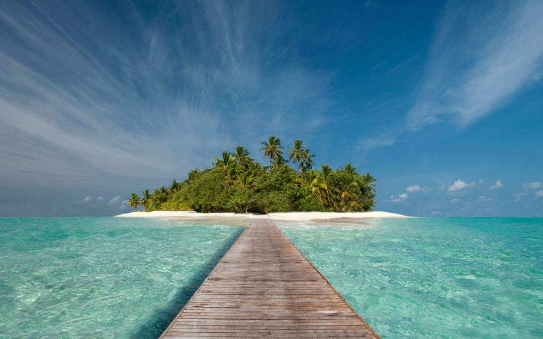 Forget the Moat and Make Your Startup a Tropical Island