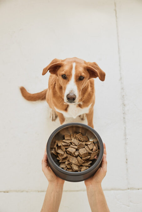 Pet dog food startup Sundays launches its air-dried kibble alternative