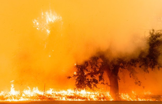As the Western US burns, a forest carbon capture tracking service catches money from Amazon & Expense Gates-backed fund