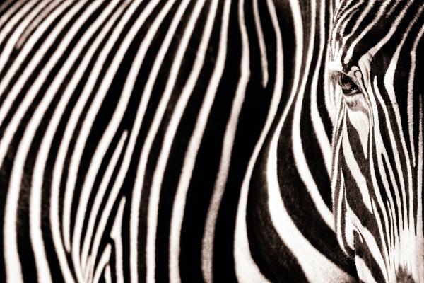 Silicon Valley must reward zebras, not unicorns