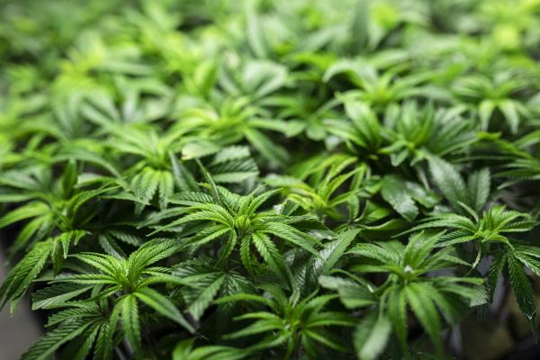 Marijuana marketing startup Fyllo acquires DataOwl
