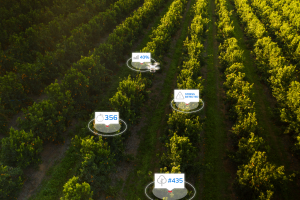 South African start-up Aerobotics raises $17M to scale its AI-for-agriculture platform