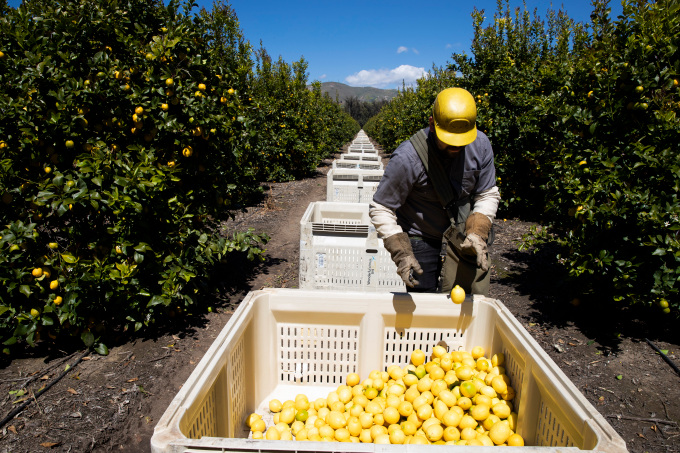 SESO Labor is providing a way for migrant farmworkers to get lawfully protected work status in the United States